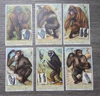 Figurine LIEBIG - Primati - Rif. N° 1598 - 6 Figurine - Liebig