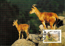 1995 - UZBEKISTAN - Ўзбекистон - Chevre D'Ouzbékistan - Markhor Goat WWF - Ouzbékistan