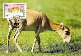 1995 - MONGOLIA - Saiga Tatarica -  Antilope Eurasiatique De Mongolie  WWF - Mongolie