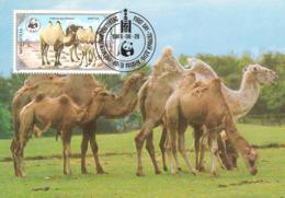 1985 - MONGOLIA -  Wild Bactrian Camel  -  Chameau Sauvage De Mongolie WWF - Mongolie