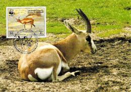 1993 - BAHRAIN - Gazelle à Goitre De Bahrein - Goitered Gazelle WWF - Bahrain