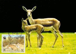 1993 - BAHRAIN - Gazelle à Goitre De Bahrein - Goitered Gazelle WWF - Bahreïn