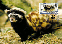 1997 - Kazakhstan Қазақстан - Marbled Polecat - Putois Marbré WWF - Kazakhstan
