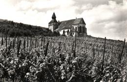 Confrérie Saint-Sébastien - La Chapelle St-Sébastien à Dambach-la-Ville, Vigne - Carte CAP N° 17 Non Circulée - Dambach-la-ville