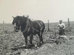 ANCIENNE TECHNIQUE AGRICOLE LABOURAGE CHAMP CHEVAL DE TRAIT HOMME FERMIER MÉTIER MILITAIRE ? BELGIQUE 7 PHOTOS - Beroepen