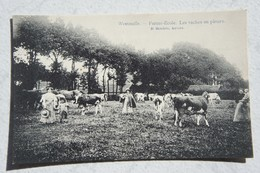 CPA WESTMALLE Naast Malle Brecht Ferme école Vaches Koe Cow - Malle