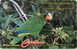 ILES CAYMAN  -  Phonecard  -  Cabble & Wirelees  - Amazona Leucocephala  -  CI $ 10 - Cayman Islands