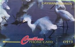 ILES CAYMAN  -  Phonecard  -  Cabble & Wirelees  -  Egretta Thula  -  CI $ 10 - Cayman Islands