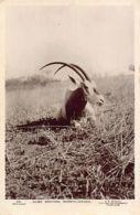 Sudan - BAHR-EL-GHAZAL - Game Hunting - REAL PHOTO - Publ. G. N. Morhig420. - Soudan