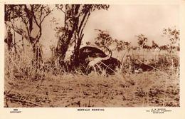 Sudan - Buffalo Hunting - REAL PHOTO - Publ. G. N. Morhig252. - Soudan