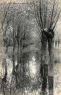 La Panne - Sous Bois Dans Les Dunes (Edit. Photo Comptoir B. Blineau) - De Panne