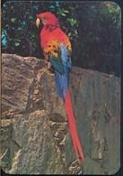 °°° 20031 - VENEZUELA - GUACAMAYA ROJO , AZUL Y AMARILLO - With Stamps °°° - Venezuela