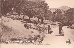 20 Corse Type Bergere Gardant Ses Cochons Chevre Goat - Autres Communes