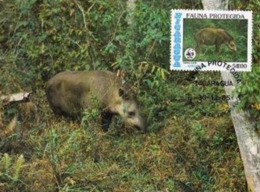 1985 - NICARAGUA - Tapir D'amerique Centrale WWF - Nicaragua