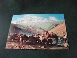 CAMMELLI DROMEDARI ARDABIL SABALAN MOUNTAIN  STORIA POSTALE FRANCOBOLLO IRAN - Iran