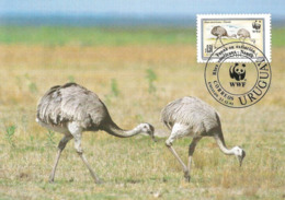 1993 - URUGUAY - Correos - Nandou Américain - Greater Rhea Nandu  WWF - Uruguay