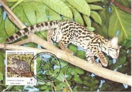 1988 - SALVADOR - Margay - Chat Tigre  - WWF - El Salvador