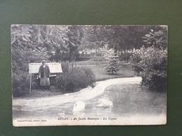 SEDAN-Au Jardin Botanique-Les Cygnes - Sedan