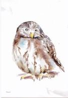 Nederland - Beleef De Natuur - Steenuil - Uil/owl/Eule/chouette - Ongebruikt - Birds