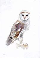 Nederland - Beleef De Natuur - Kerkuil - Uil/owl/Eule/chouette - Ongebruikt - Birds