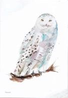 Nederland - Beleef De Natuur - Sneeuwuil - Uil/owl/Eule/chouette - Ongebruikt - Birds
