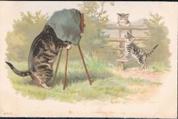 Chats Humanisés  - Cats -  Katze-  Geklede Poezen Fotograaf - Cats