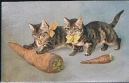 Chats Humanisés  - Cats -  Katze-  Geklede Poezen Met Wortel - Cats