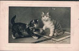 2 Chats - Cats -katzen - Poesjes Met Lij -Sperlich - Cats