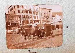 FUNCHAL MADEIRA DIARIO NOTICAS CARRO ATTELAGE FIACRE CAVALIER INDIGENE ACORES PORTUGAL VOYAGE BATEAU L'IPHIGENIE 1900 - Madeira