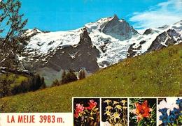 05 - La Meije - Fleurs Alpestres Dominées Par Les Glaciers Et Le Pic De La Meije - Multivues - Francia