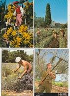 20 / 3 / 391. -  LOT  DE  22  CPM  CUEILLETTES  DIVERSES - Toutes Scanées - Cartes Postales