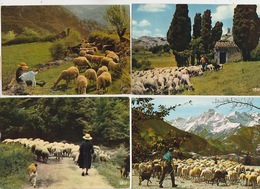 20/ 3 / 392  -  ELEVAGE  DES  MOUTONS  - LOT  DE  14. CPM - TOUTES SCANÉES - Cartes Postales