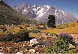 05 - Col Du Lautaret - La Meije Vue Du Jardin Alpin - Francia