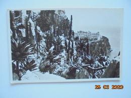 Monaco. Les Jardins Exotiques. La Cigogne 36 PM - Giardino Esotico