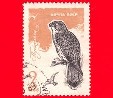 RUSSIA  - 1965 - Uccelli Rapaci - Falco - Common Kestrel (Falco Tinnunculus) - 2 - 1923-1991 USSR