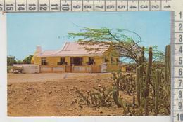 Aruba Antille Typical Aruban Cunucuhouses With Cactus - Aruba