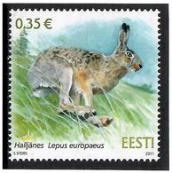 Estonia 2011 .European Brown Hare. 1v: 0.35.   Michel # 698 - Estonia
