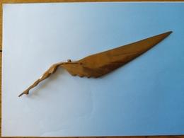 Ouvre Lettre Bronze Art Nouveau - Letter-opener