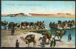 1919 GB Kantara, Camels, Suez Canal Egypt Postcard - Manchester. Army Post Office SX8, Censor. Cairo Postcard Trust - 1902-1951 (Re)
