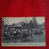 CARAVANE DE RAVITAILLEMENT PAR BOEUFS PORTEURS AU LAOS - Laos