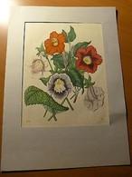 Botanique-Fleurs-Planche Lithographiée Et Rehaussée Au Pochoir - Books, Magazines, Comics