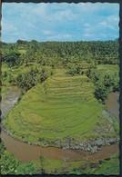 °°° 20256 - INDONESIA - SAWAH BERTINGKAT DIDESA SAYAN , BALI °°° - Indonesia