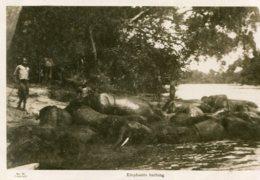 SUDAN - Ethnic - Elephants Bathing RPPC - Soudan