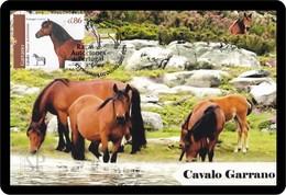 Portugal 2019 Raças Autóctones 3.º Grupo Máximo Cavalo Sorraia Chevaux Horse Pferd Caballo лошадь Maximum Maxicard Maxi - Horses