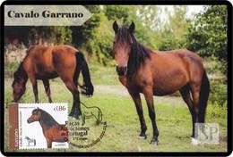 Portugal 2019 Raças Autóctones 3.º Grupo Cavalo Sorraia Chevaux Horse Postal Máximo Paard Päerd лошадь Maximum Maxicard - Horses