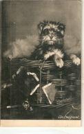 """Dog In Basket. An Emigrant"" Tuck Raphotype Series PC # 2902 - Tuck, Raphael"