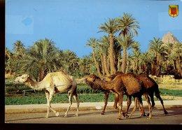 Maroc - Algérie - Tunisie - Egypte - Lot De 20 Cartes Modernes - Toutes Scannées - Cartes Postales