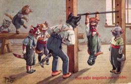 Katze, Katzen In Der Turnhalle, 1917 - Thiele, Arthur