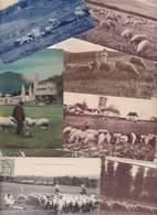 Lot N° 2296de 10 CPA Moutons Divers Déstockage Pour Marchands Ou Collectionneurs - Cartes Postales