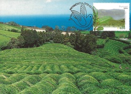 CARTE MAXIMUM - MAXICARD - MAXIMUM KARTE - MAXIMUM CARD - PORTUGAL - AZORES / AÇORES - CULTURE DU THÉ - Plants